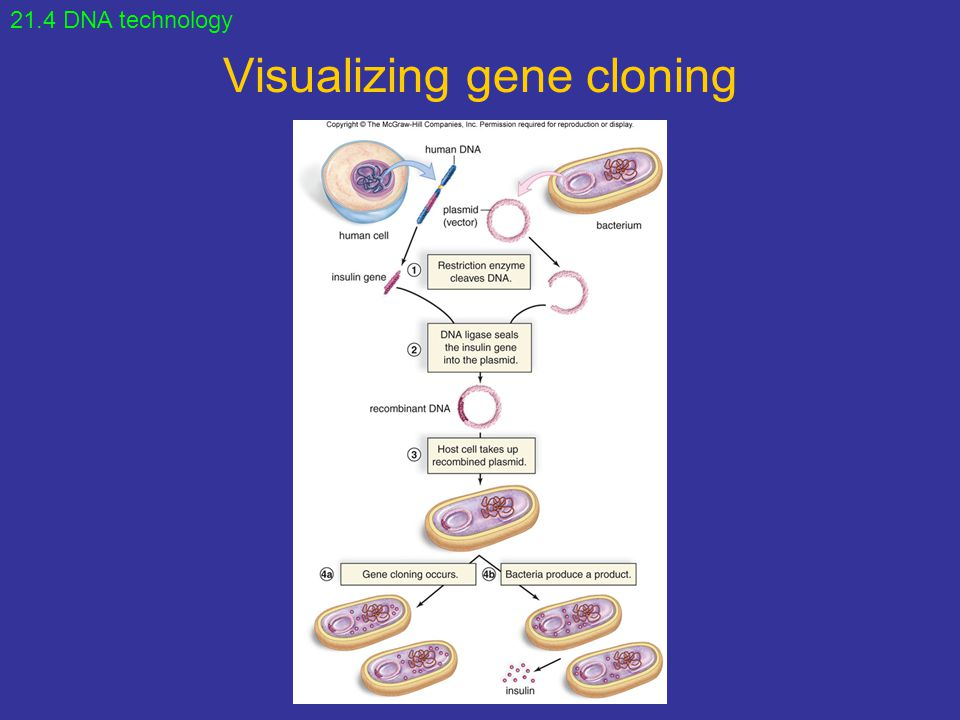 Visualizing gene cloning