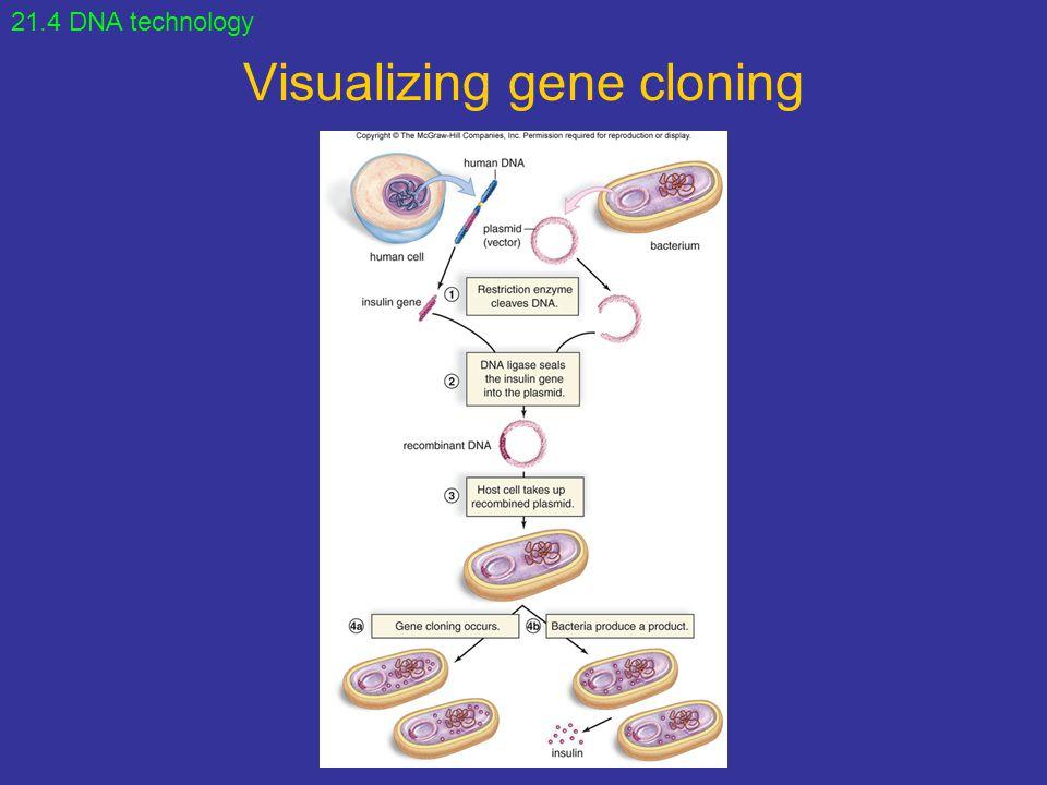 Visualizing gene cloning