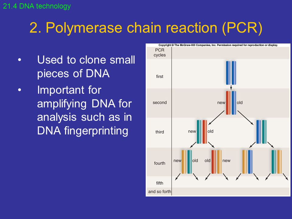 2. Polymerase chain reaction (PCR)