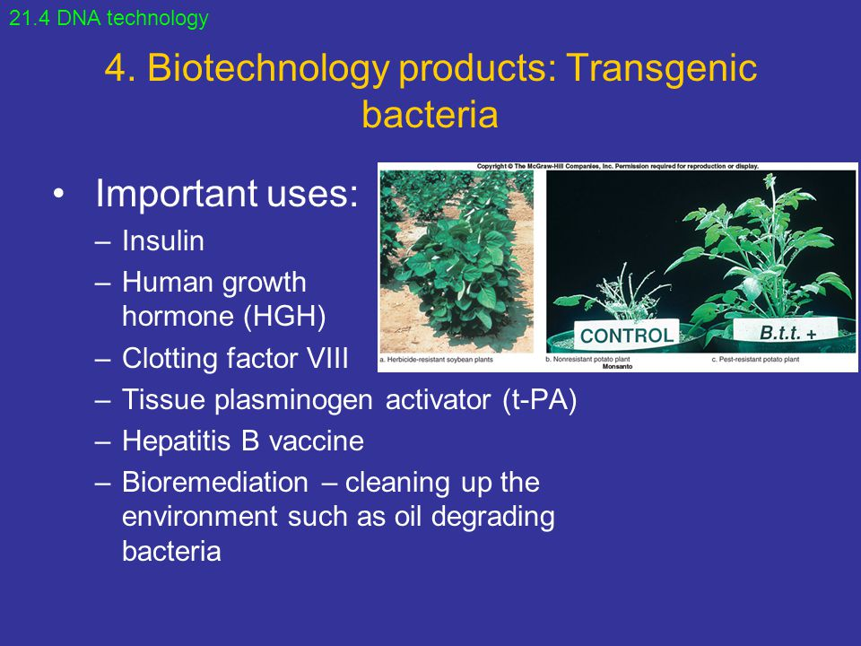 4. Biotechnology products: Transgenic bacteria