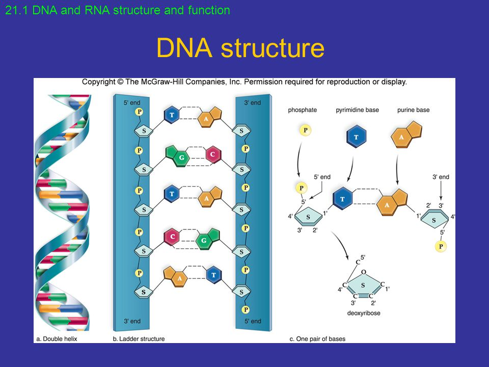 Points to Ponder What are three functions of DNA? - ppt download
