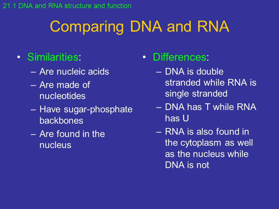 Comparing DNA and RNA Similarities: Differences: Are nucleic acids