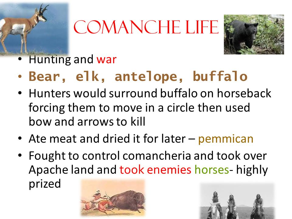 Comanche Life Hunting and war Bear, elk, antelope, buffalo