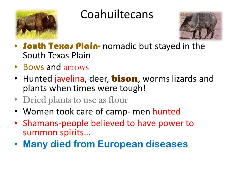 Coahuiltecans South Texas Plain- nomadic but stayed in the South Texas Plain. Bows and arrows.