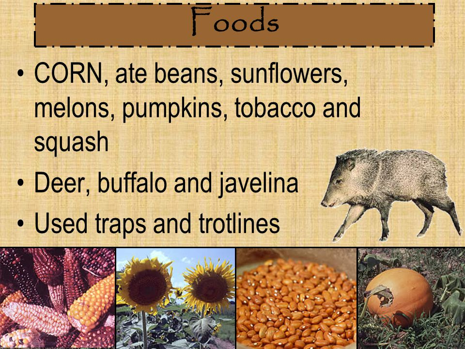 Foods CORN, ate beans, sunflowers, melons, pumpkins, tobacco and squash. Deer, buffalo and javelina.