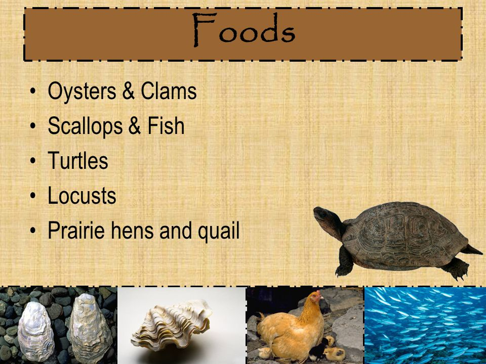 Foods Oysters & Clams Scallops & Fish Turtles Locusts