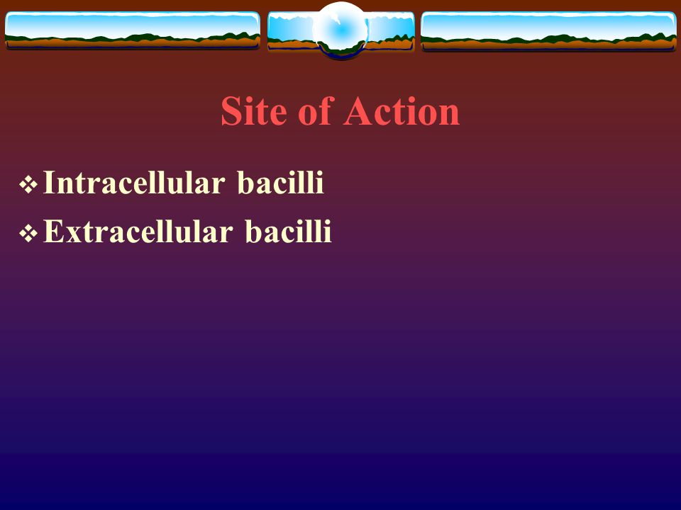 Site of Action Intracellular bacilli Extracellular bacilli