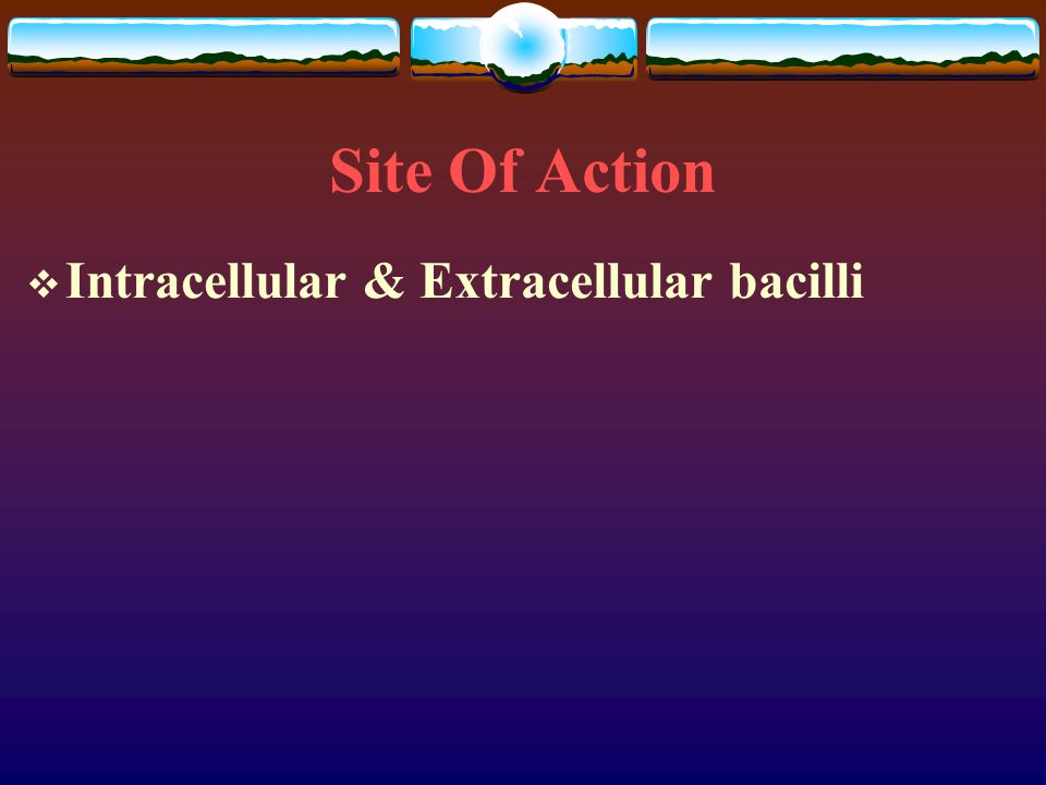 Site Of Action Intracellular & Extracellular bacilli