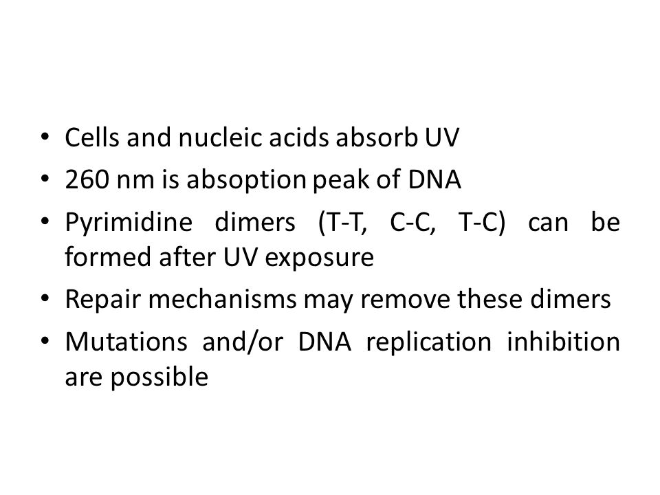 Cells and nucleic acids absorb UV
