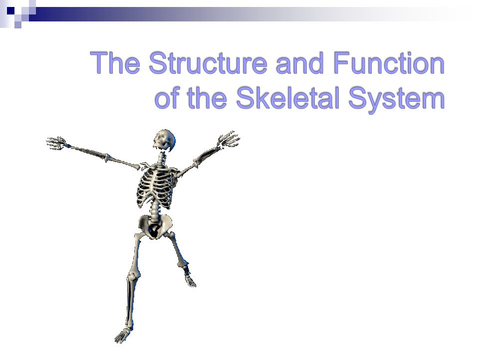 The Structure and Function of the Skeletal System