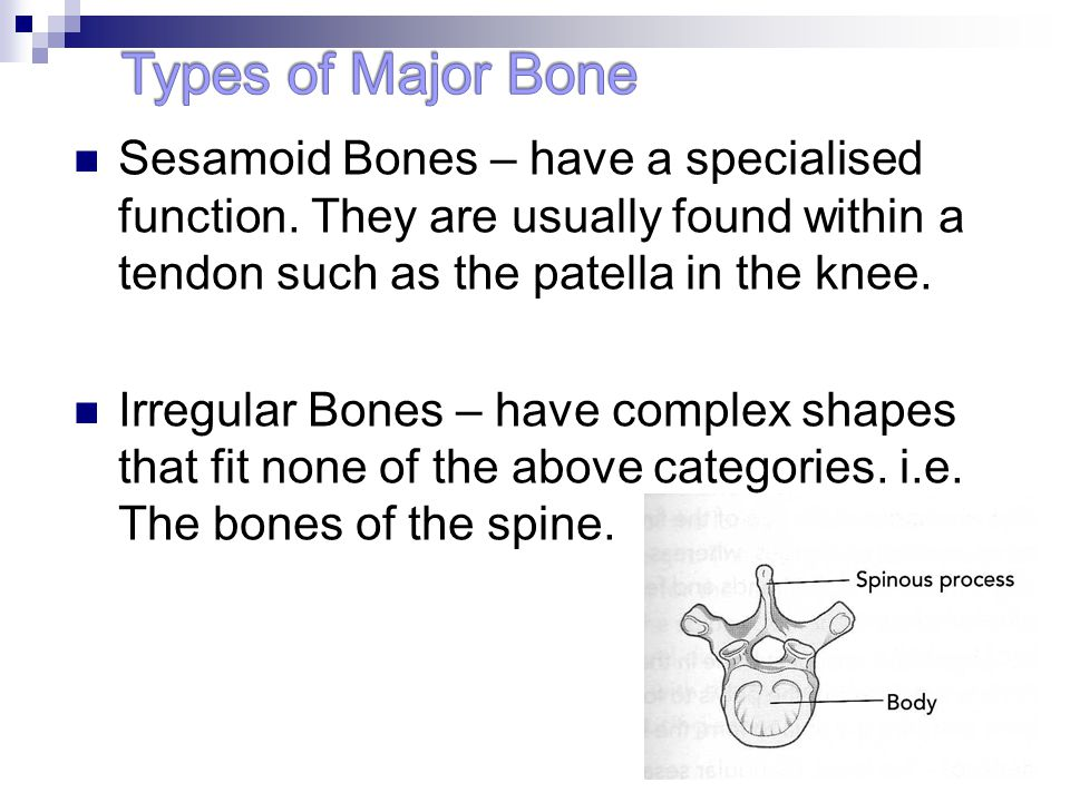 Types of Major Bone Sesamoid Bones – have a specialised function. They are usually found within a tendon such as the patella in the knee.