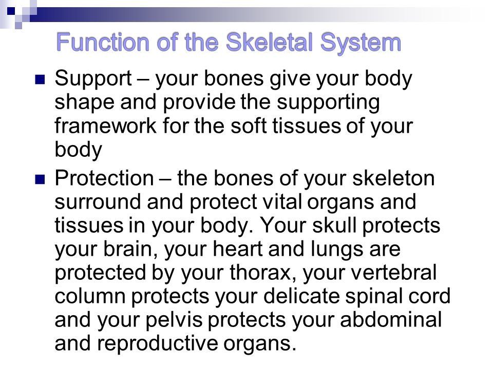 the role of our skeletal system The main effects of exercise on the skeletal system are strengthening and building of bone density, an elongation of the bones in.