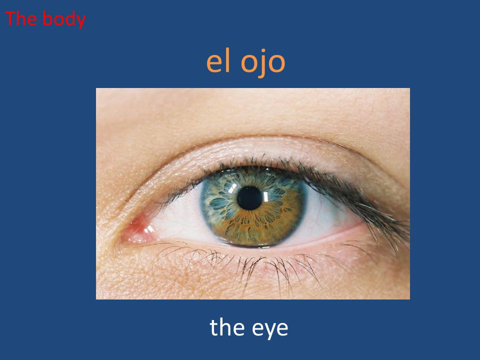 The body el ojo the eye