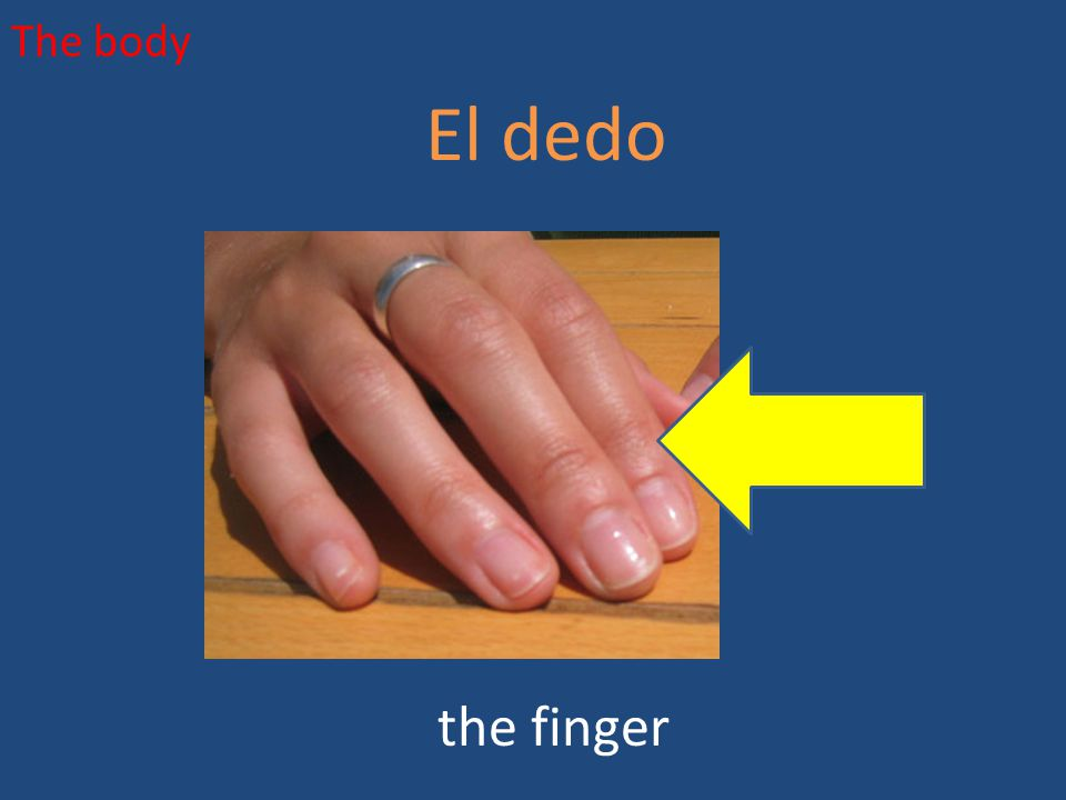 The body El dedo the finger