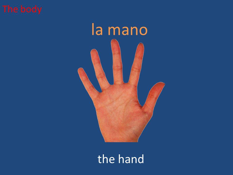 The body la mano the hand