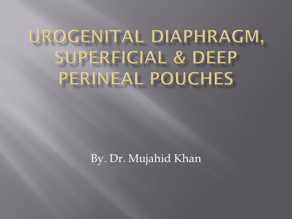 UROGENITAL DIAPHRAGM, SUPERFICIAL & DEEP PERINEAL POUCHES