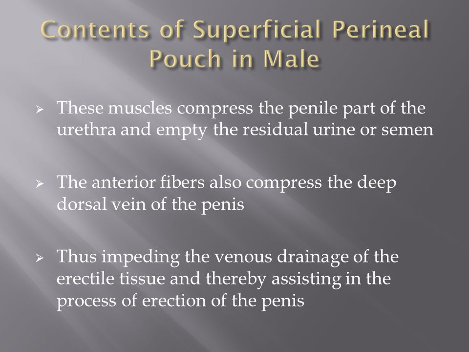 Contents of Superficial Perineal Pouch in Male