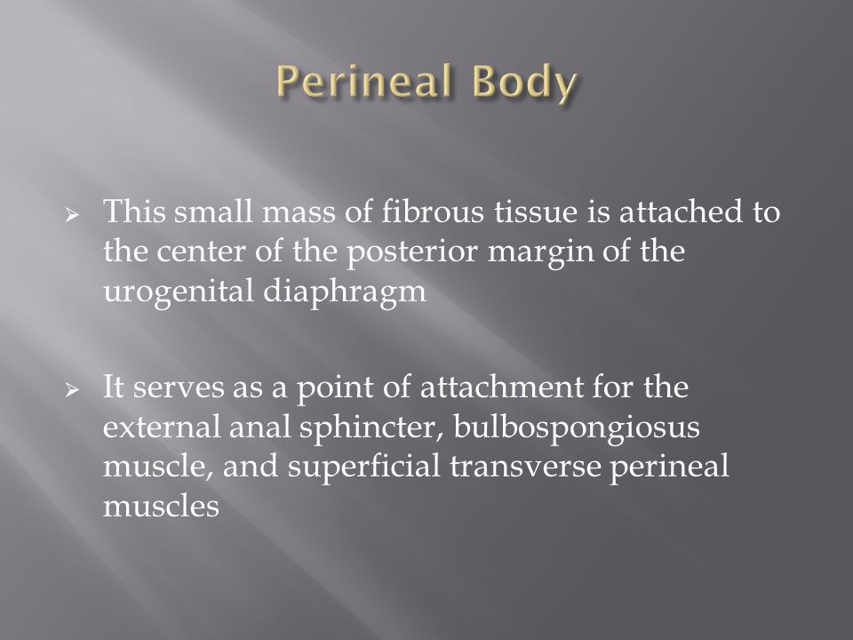 Perineal Body This small mass of fibrous tissue is attached to the center of the posterior margin of the urogenital diaphragm.
