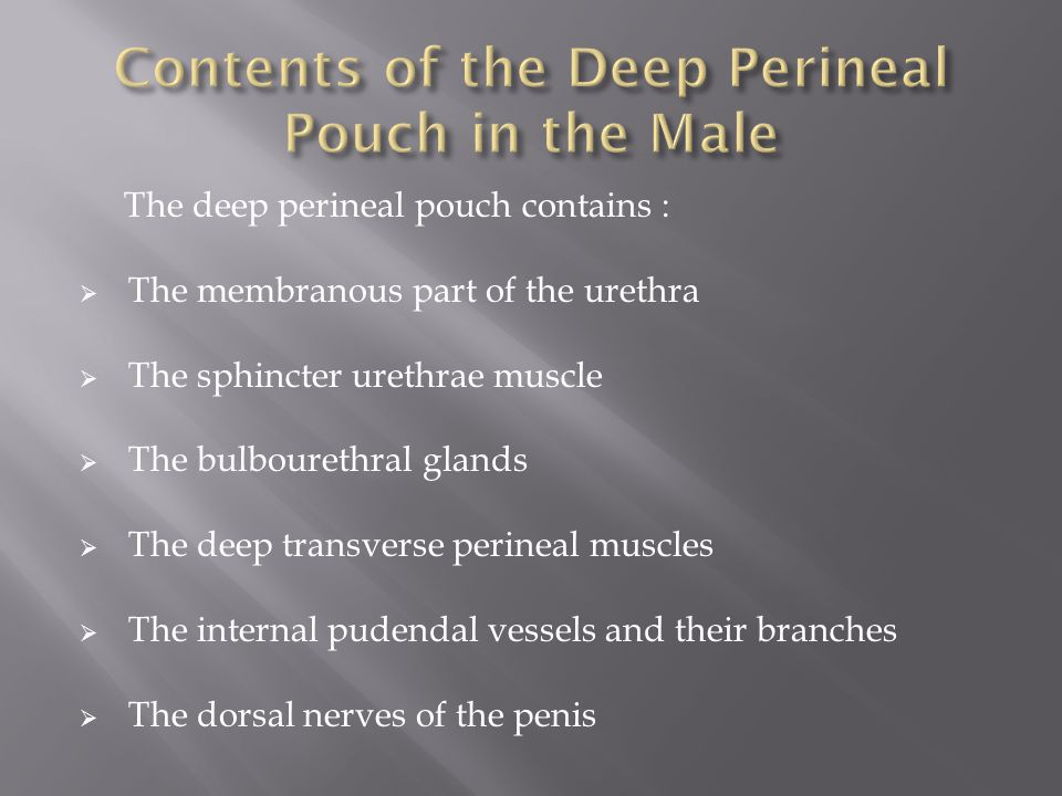 Contents of the Deep Perineal Pouch in the Male