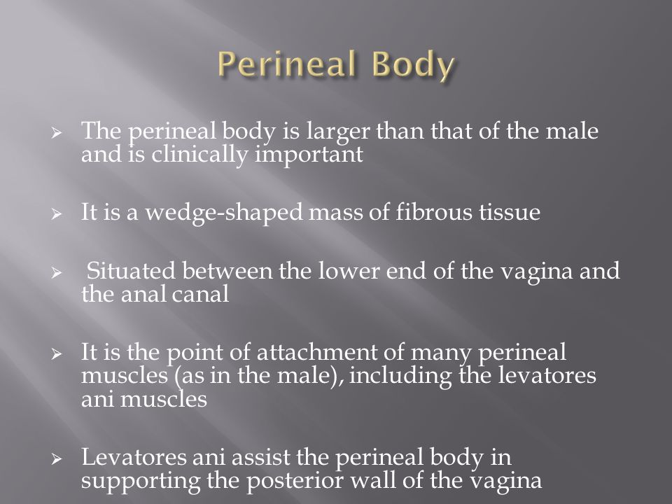 Perineal Body The perineal body is larger than that of the male and is clinically important. It is a wedge-shaped mass of fibrous tissue.