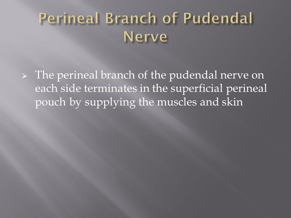 Perineal Branch of Pudendal Nerve