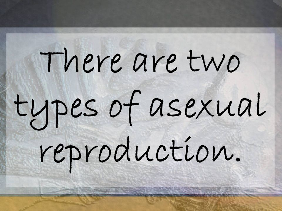 There are two types of asexual reproduction.