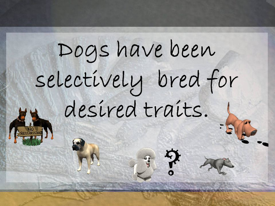 Dogs have been selectively bred for desired traits.