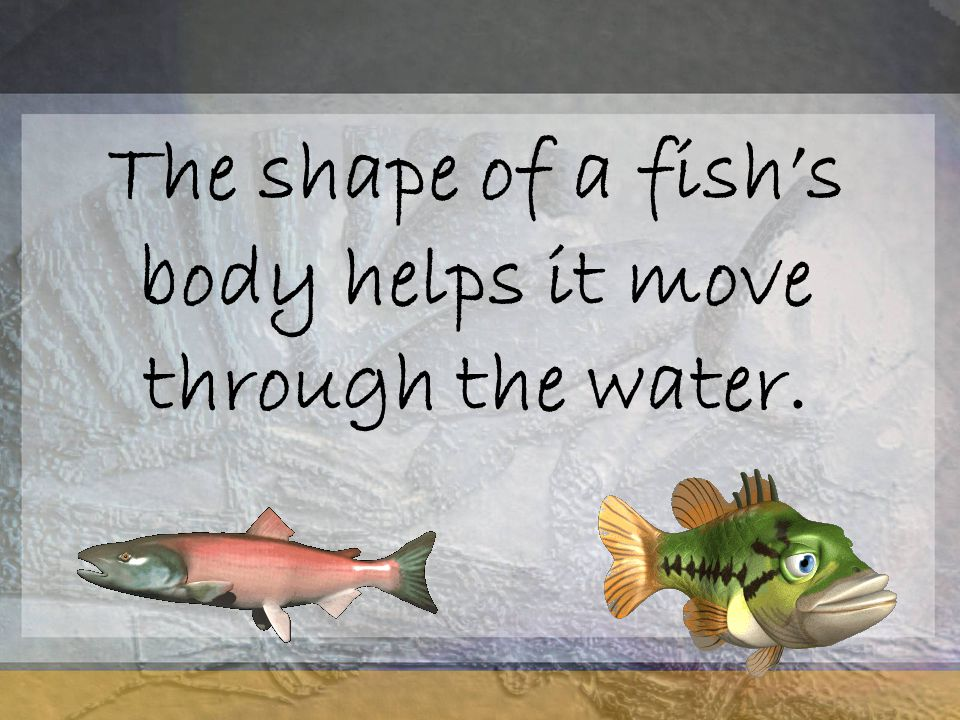 The shape of a fish's body helps it move through the water.