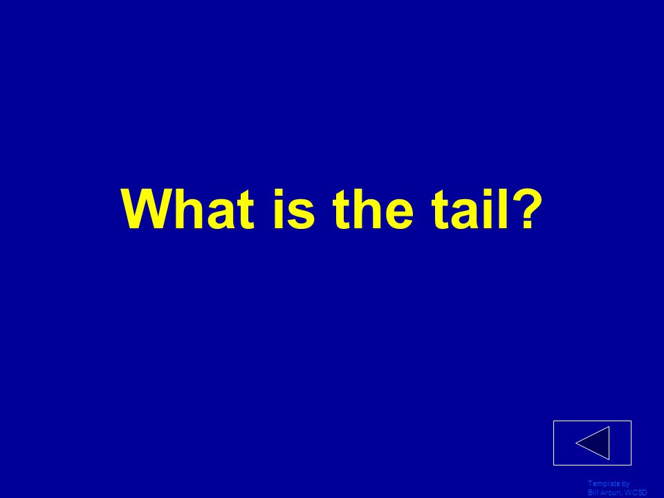 What is the tail Template by Bill Arcuri, WCSD