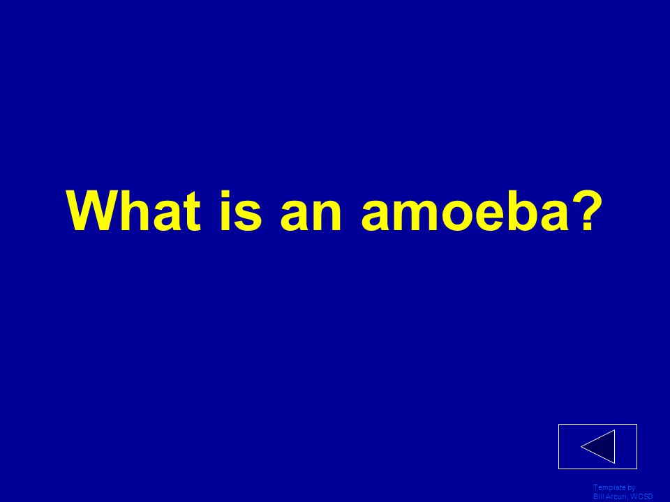 What is an amoeba Template by Bill Arcuri, WCSD