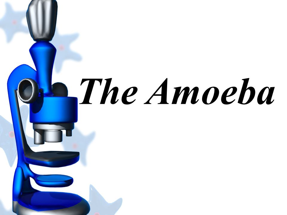 The Amoeba