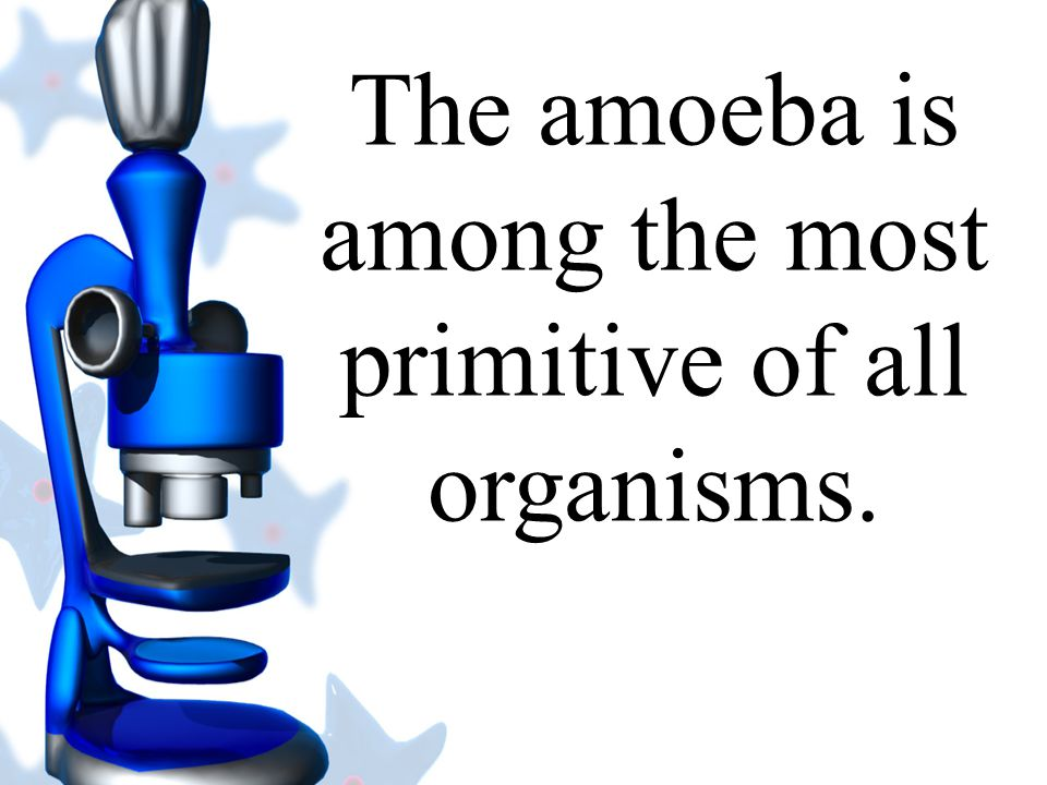The amoeba is among the most primitive of all organisms.