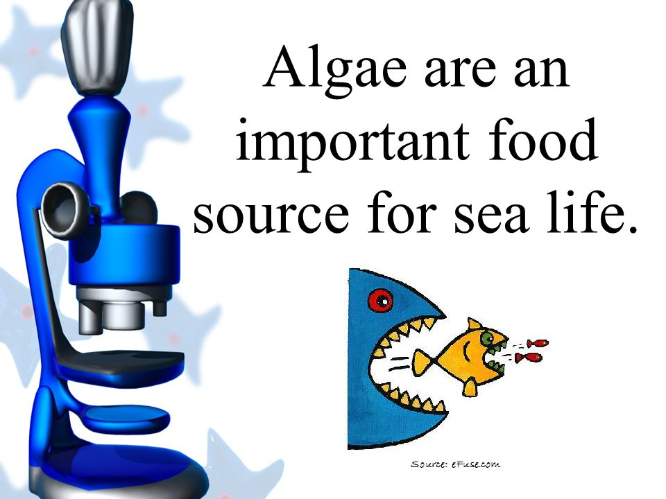 Algae are an important food source for sea life.
