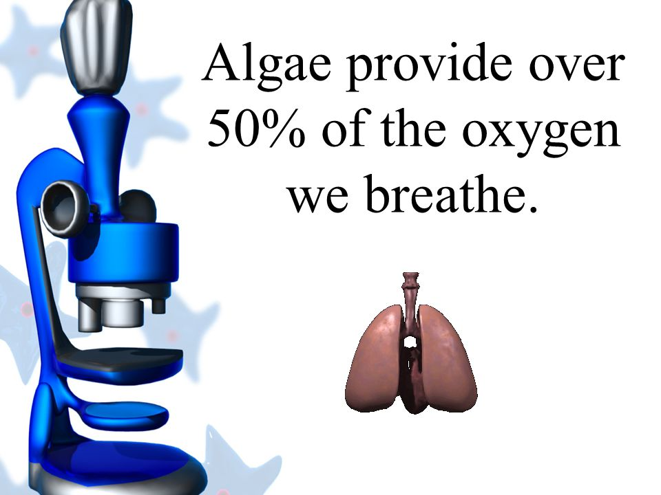 Algae provide over 50% of the oxygen we breathe.