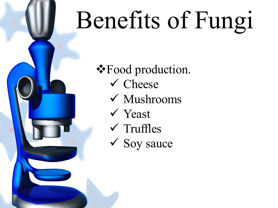 Benefits of Fungi Food production. Cheese Mushrooms Yeast Truffles