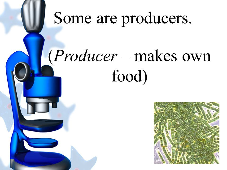 (Producer – makes own food)