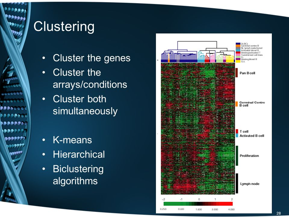 Clustering Cluster the genes Cluster the arrays/conditions