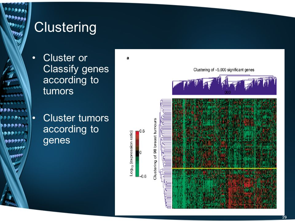 Clustering Cluster or Classify genes according to tumors