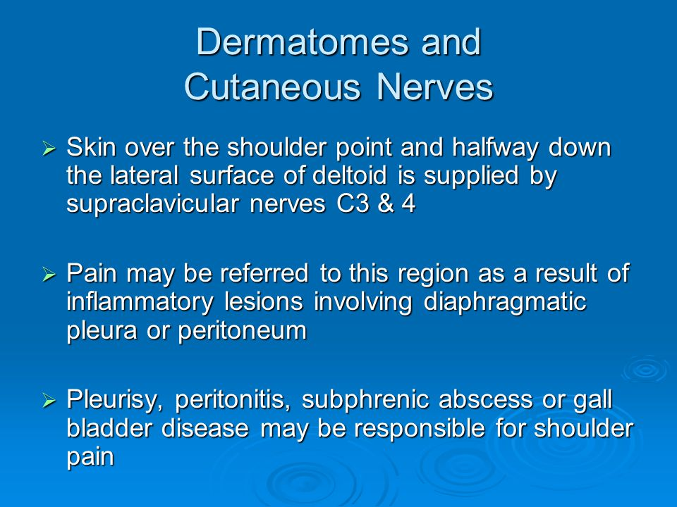 Dermatomes and Cutaneous Nerves