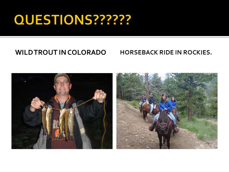 QUESTIONS Wild Trout in Colorado Horseback Ride in Rockies.