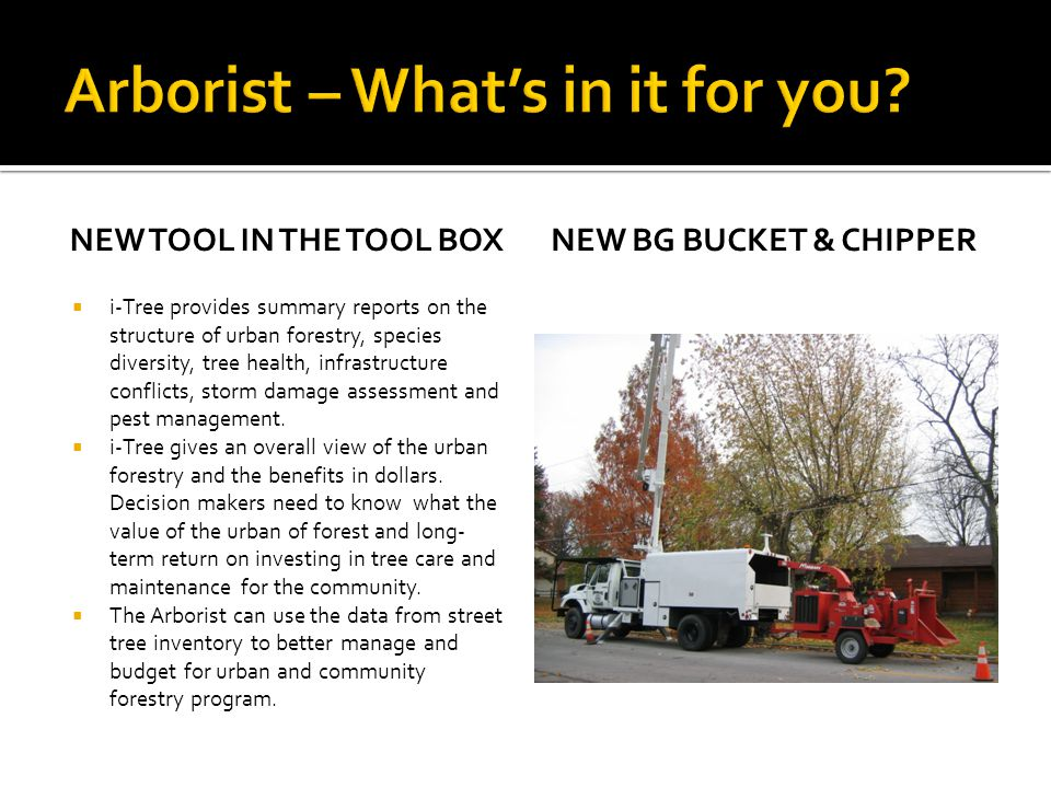 Arborist – What's in it for you