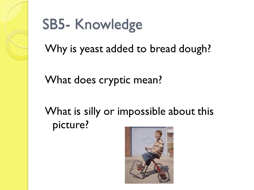 SB5- Knowledge Why is yeast added to bread dough. What does cryptic mean.
