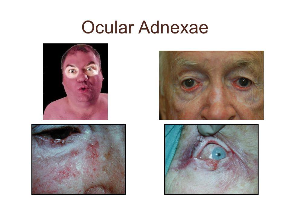 Ocular Adnexae