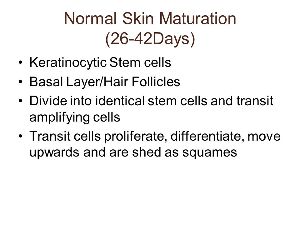 Normal Skin Maturation (26-42Days)