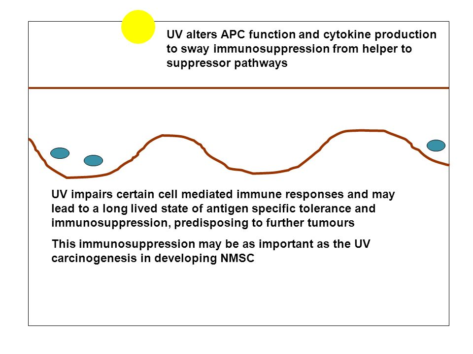 UV alters APC function and cytokine production to sway immunosuppression from helper to suppressor pathways