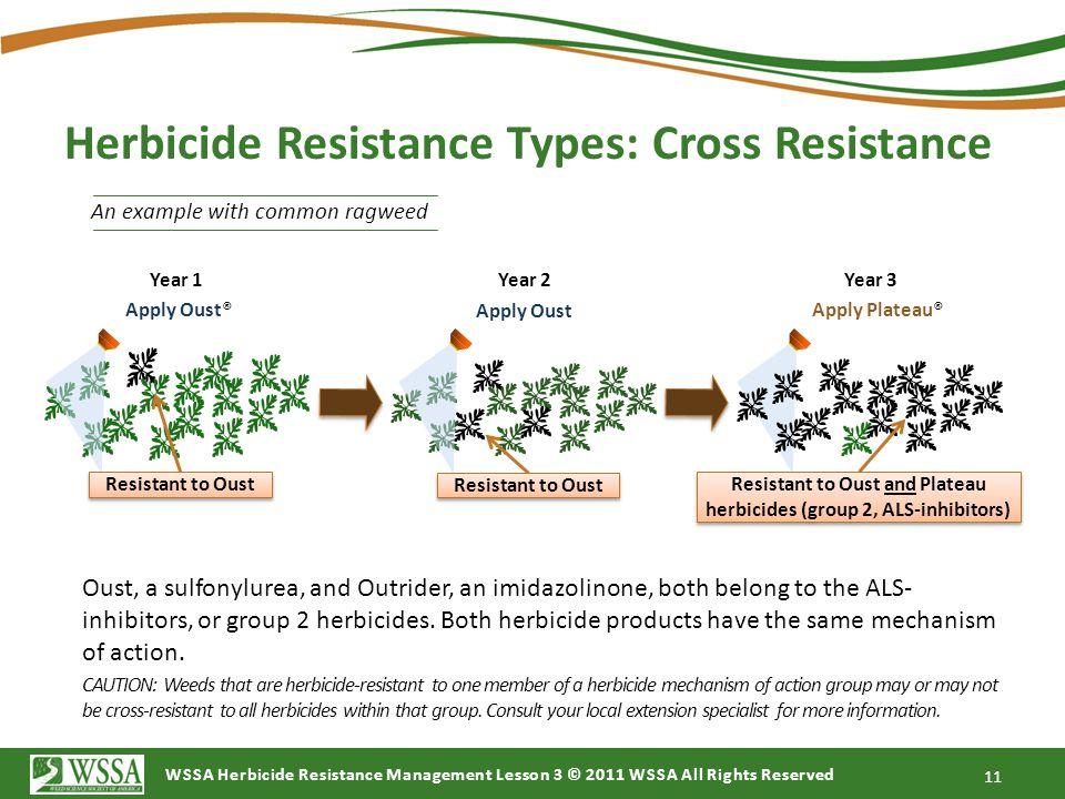 Herbicide Resistance Types: Cross Resistance