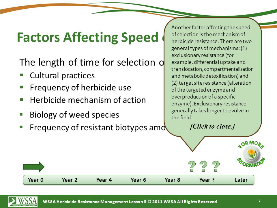 Factors Affecting Speed of Selection