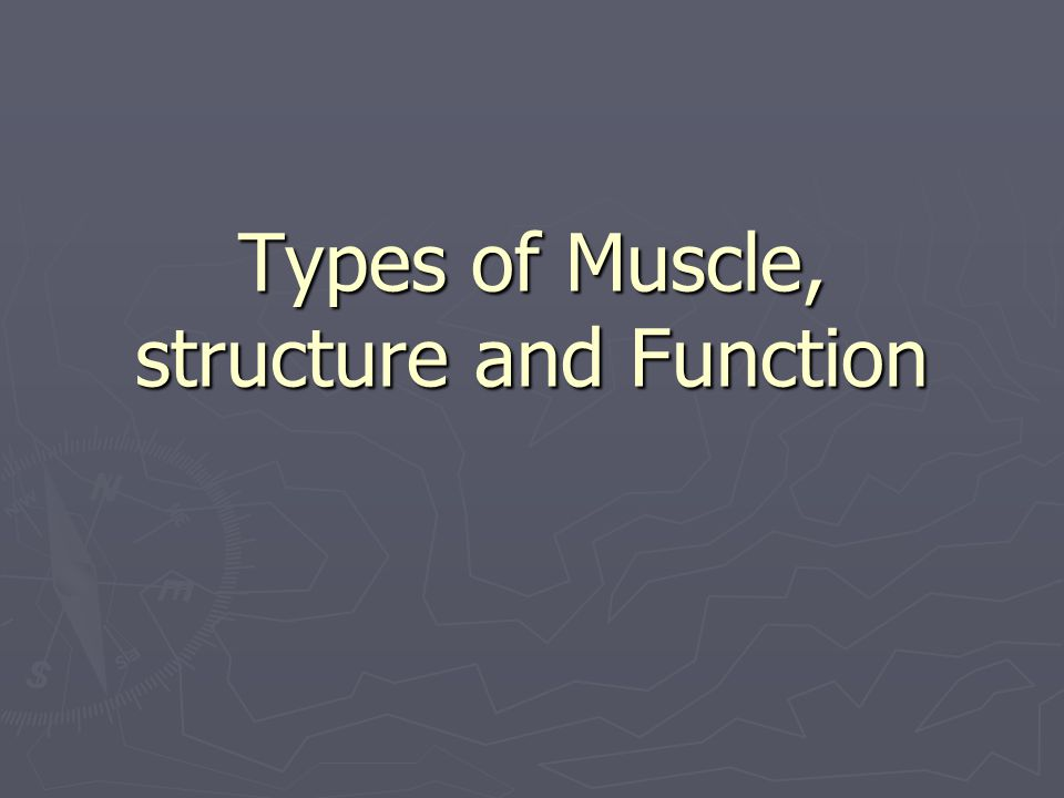 Types of Muscle, structure and Function