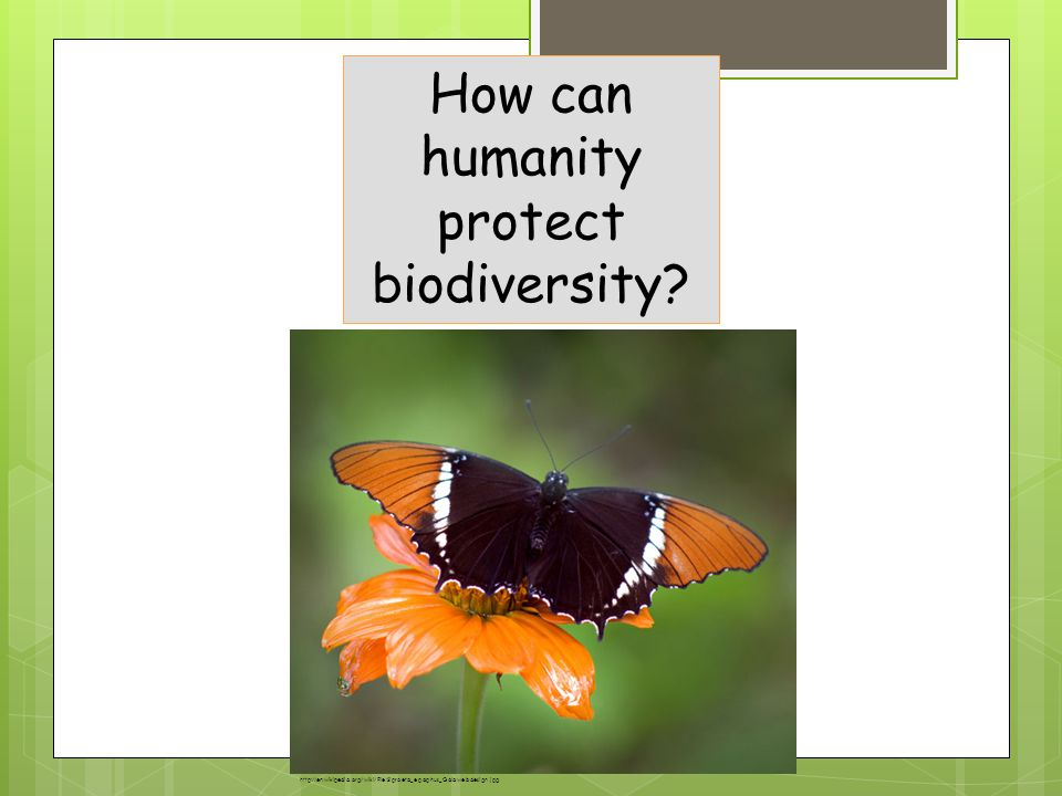 How can humanity protect biodiversity