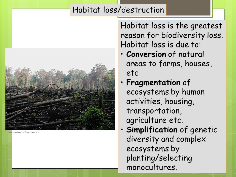 Habitat loss/destruction